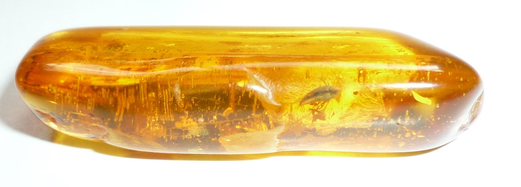 Baltischer Bernstein mit Einschluß, Inkluse, Serropalpidae, Düsterkäfer